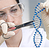 Genome Editing im Labor